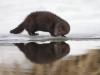 Peegeldus-see pilt valiti Wild Wonders of Europe aprillikuu 2011 fotovõistlusele