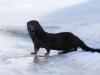 Uudishimulik-see pilt valiti Wild wonders of europe juulikuu 2011a fotovõistlusele