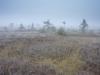 tundra eesti moodi