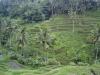 Riisipõld- indoneesia