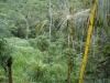 Vihmametsad - Indoneesia