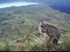 Makaak mäe otsas - Indoneesia