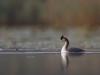 Tuttpütt sügisesel järvel