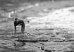 vesipapp