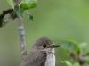 Väike linnuke