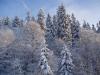 Lumised Haanja kõrgustikud