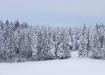 Lumised kuused