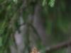Oravapoisu