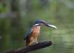 Osav kalastaja