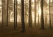 hommikuses metsas