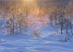 Päikesetõusu aegu