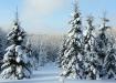 Talvine haabja kõrgustik