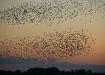 Palju linde