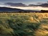 Kuldsed viljapõllud - Norra
