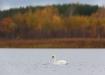 Sügisesel järvel